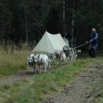 Летний лагерь «Большое Приключение» в Карелии
