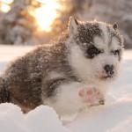 Как родились собаки в «Большом Приключении»