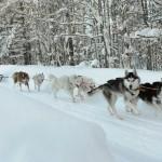 Программа детского отдыха на зимние и весенние каникулы