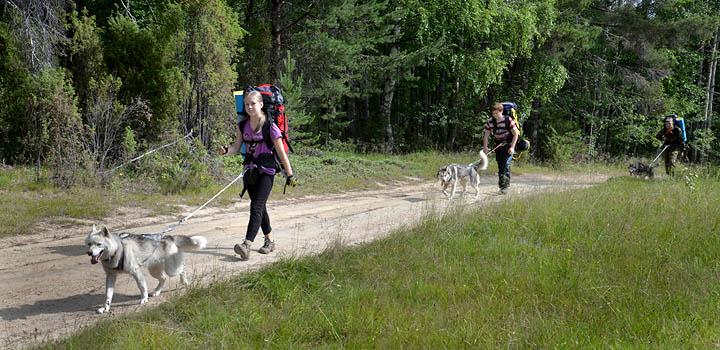 В походе дети и собаки