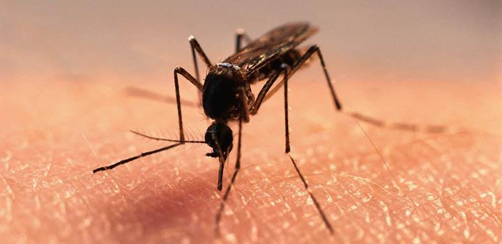 Комары – такая же достопримечательность Карелии, как чистые леса или тысячи озер