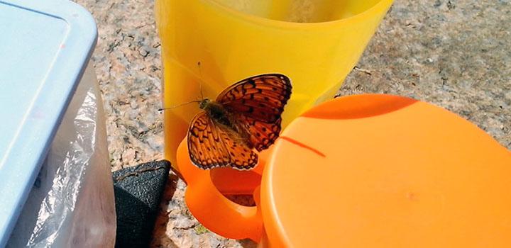 Натюрморт с бабочкой