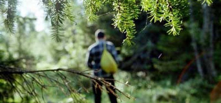 Пошел в лес за хворостом и заблудился?