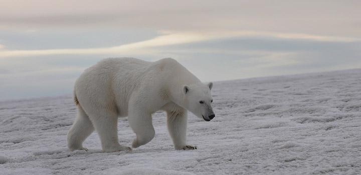 Медведь не дурак, он не будет связываться с агрессивным человеком.