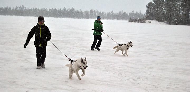 Прогулка с собаками на озере Курдас