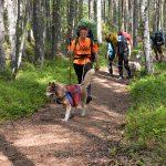 Детский лагерь «Большое Приключение». Путь по лесным тропам в компании с верными хаски – веселее.