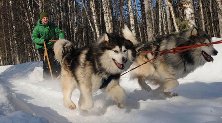Зимний лагерь в Карелии.