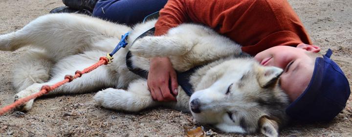 Кто кого выбирает: собака человека или человек собаку?