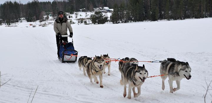 Зимой здесь упряжка – самый лучший транспорт.