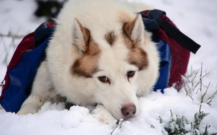 У Герды – двоюродной бабушки крошки Сноу – прилив снежности.