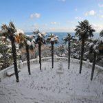 Крымская экзотика – пальмы в снегу.