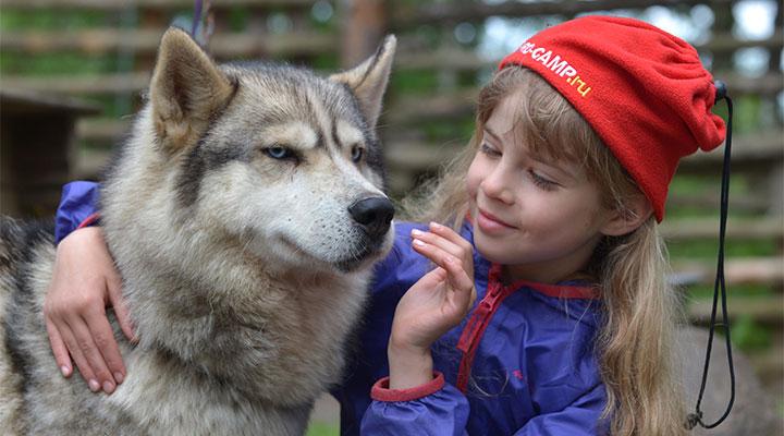Хаски – самые любимые детьми жители «Большого Приключения».