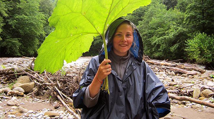Большой лопух – природный дождевик