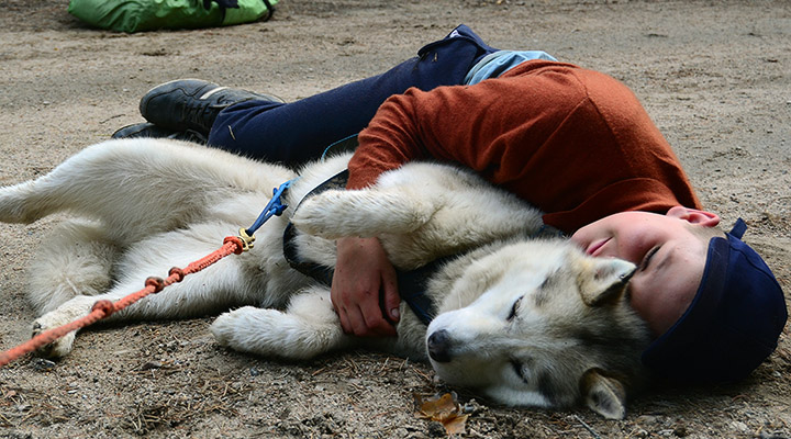 Спать плечом к плечу с собакой