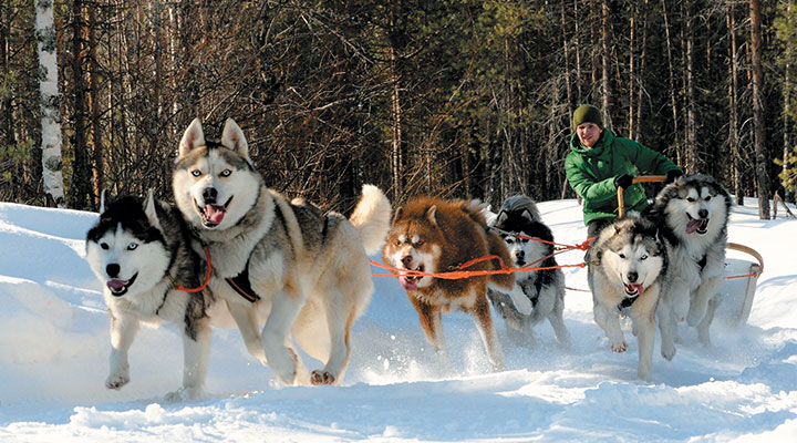 Детский лагерь на весенние каникулы 2020 в Карелии
